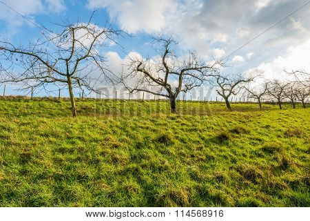 Bare Apple Trees Against A Cloudy Sky