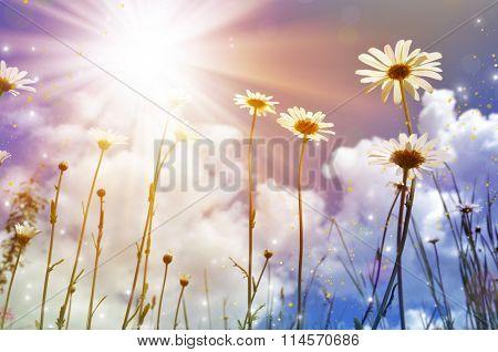 white daisies on blue sky