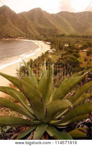 South America Venezuela Chuao Coast