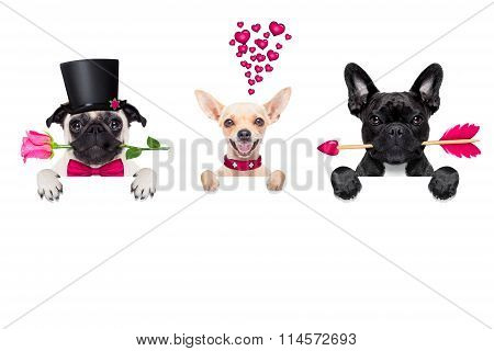 Row Of Valentines Dogs In Love