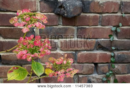 Red Green Hydrangea Brick Wall