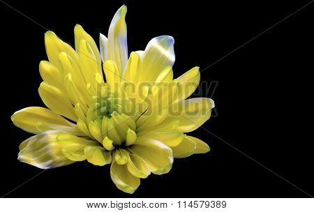single pale yellow flower