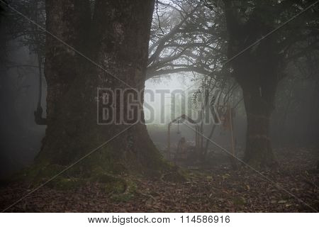 Foggy Morning in Forest
