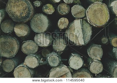 Fire wood texture. Soft hipster colors