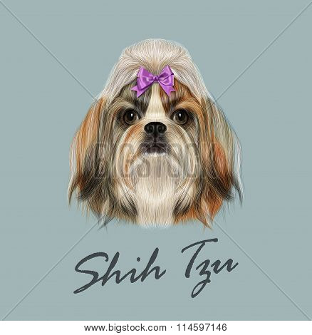 Shih Tzu Dog Portrait. Vector Illustration