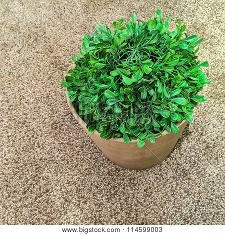 Green Plant On Carpet Background