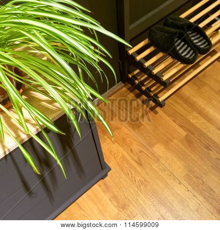 Entrance Hall With Plant And Slippers On Shoe Rack