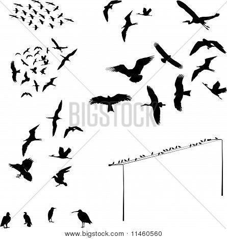 set of bird - vector