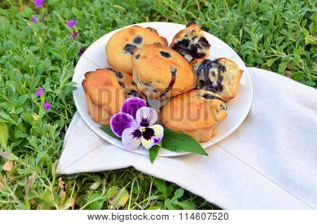 Blueberries muffins on a white plate.