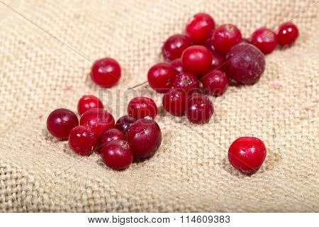 Scattering Of The Frozen Cranberry Berries On A Sacking