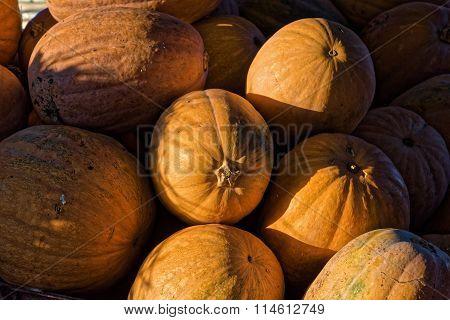 Pumpkins in Greece