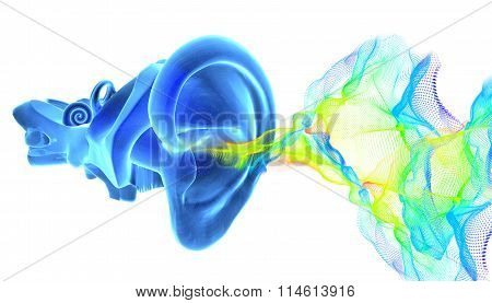 3D Ear Anatomy With Sound Waves
