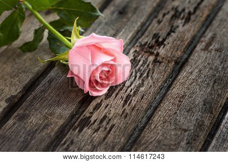 Single Pink Rose On Wooden Old Background