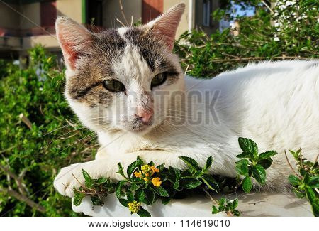 Portrait of a dying cat