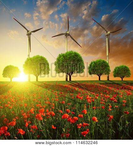 Red poppy field with trees and wind turbines in the sunset. Spring landscape.