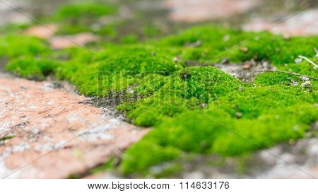 Aged Stone Wall Covered With Moss Texture