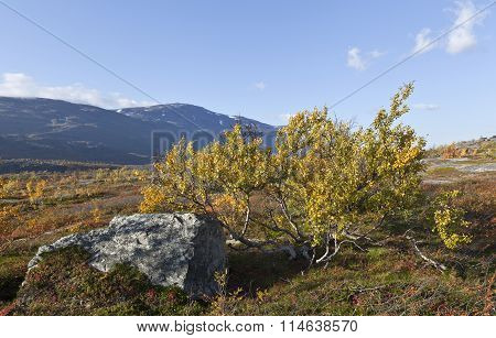 Rock and bushes on the moorland, mountain.