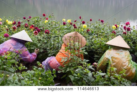 Asian gardeners with traditional conical hat taking care of a botany garden