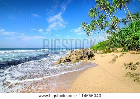 Palms on a beach