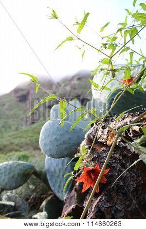 Flor del bicácaro