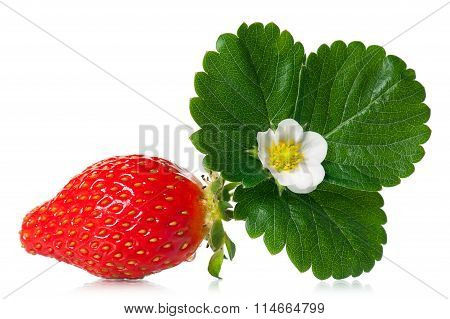 Ripe Sweet Strawberry