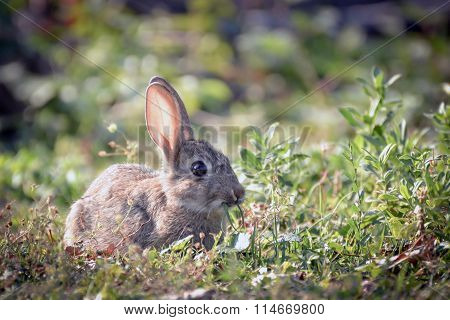 Rabbit on a Sunny day