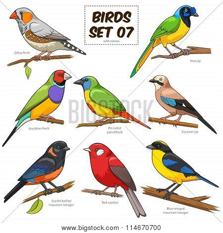 Bird set cartoon colorful vector illustration