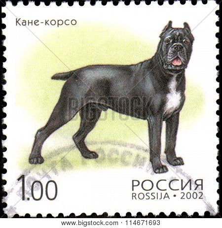 Russia - Circa 2002: A Stamp Printed In Russia Shows Dog Breed Cane - Corso,  Circa 2002