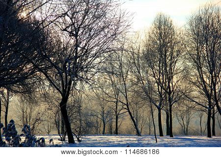 lots of trees in winter