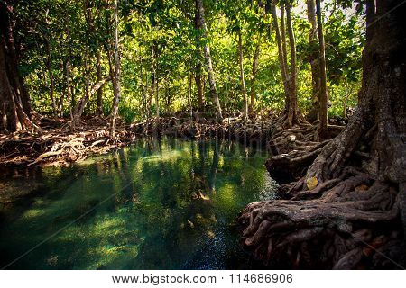 Mangrove Trees Reflection In River With Roots Under Sunlight