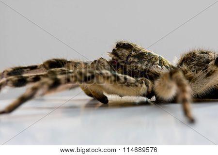 Creepy Spider