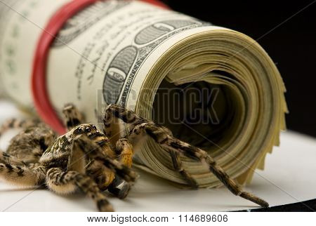 Tarantula And Dollars Roll - Savings Protection Concept