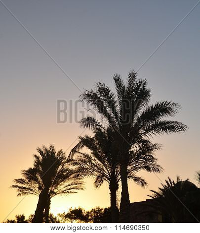 Palm Trees Outlines And Resort Houses
