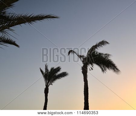Palm Trees At Tropical Sunrise