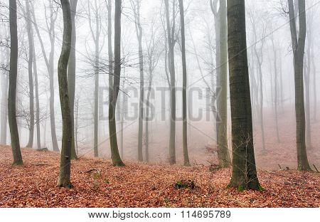 Autumn Forest With Trees At Mist