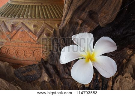 Vintage And Boutique Look Flower Plumeria With Old Baked Clay Vase And Timber Wood Background