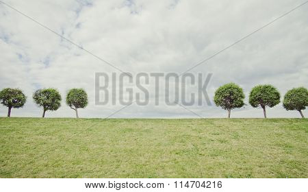 Trees symmetry geometric Minimalistic summer natural Background