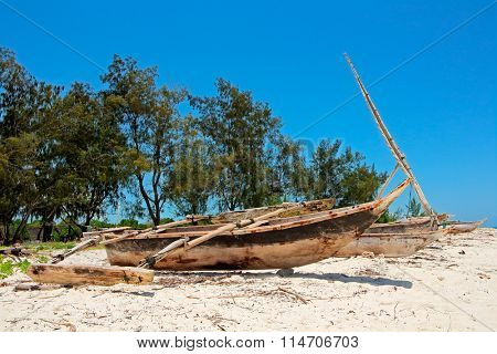 Wooden sailboats  (dhows) and trees on a tropical beach of Zanzibar island