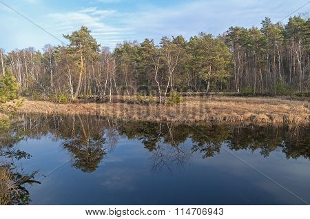 Reflection Of Trees In The Water Of A Small Wetland Forest Lake.
