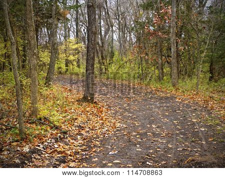 A Dirt Road in the Woods