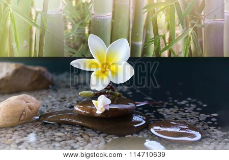 Flower Plumeria With Bamboo Tree Background On Relaxing And Meditation Or Aroma Spa Mood