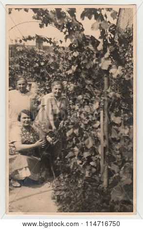 Vintage photo shows women in the back yard with grapes