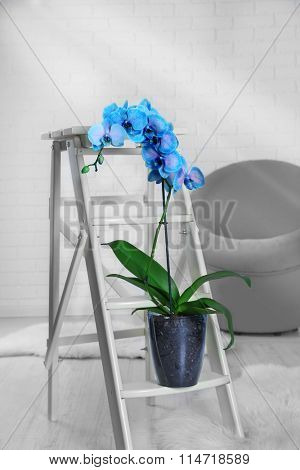 Beautiful blue orchid on decorative table in the room, close up