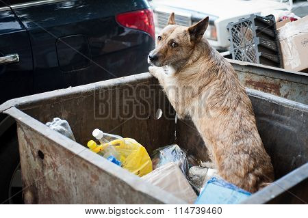 Dog searches for food