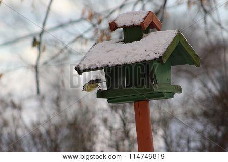 Winter feeding of birds