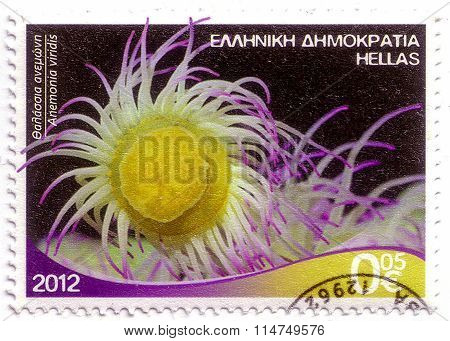 Greece - Circa 2012 Stamp Printed By Greece, Shows Anemonia Viridis, Circa 2012