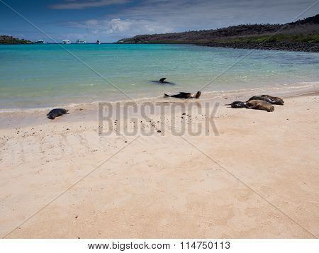 Sea lions relaxing on the beach in the Galapagos