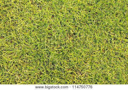 texture grass floor Golf Course Background pattern