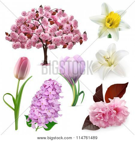 Spring flowers, vector icon set