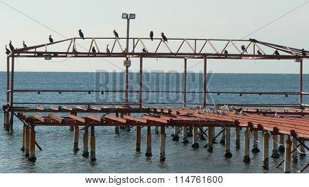 Birds resting